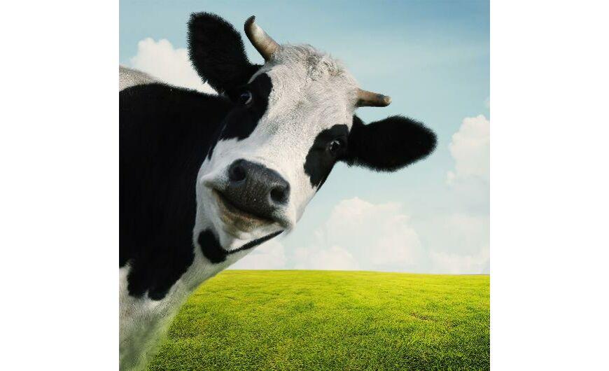 zsírvesztés tejsavó